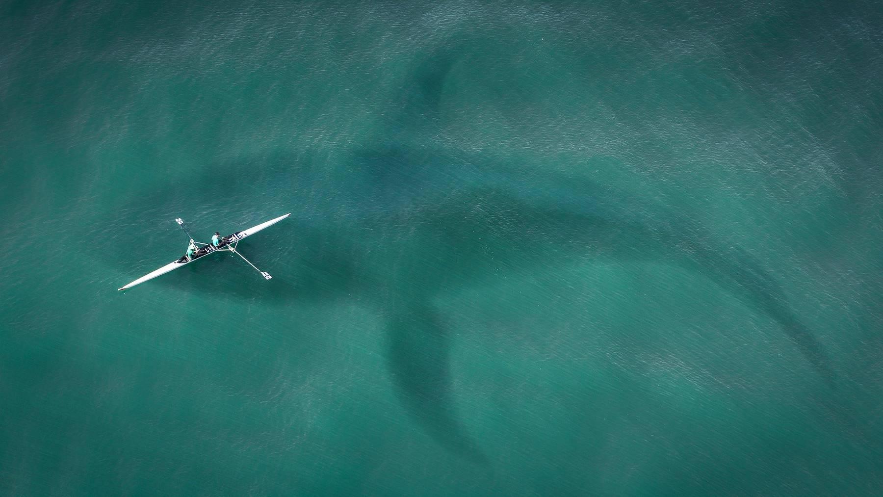 Der Weisse Hai ist längst nicht das gefährlichste Tier der Wildnis.