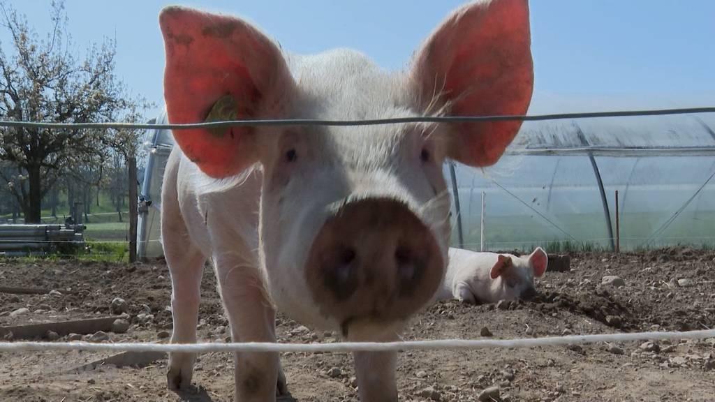 Befürworter präsentieren die Vorteile der Pestizid-Initiative