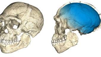 Der Homo sapiens (rekonstruiert) vom Djebel Irhoud hat ein modernes Gesicht, aber eine altertümliche Schädelform.