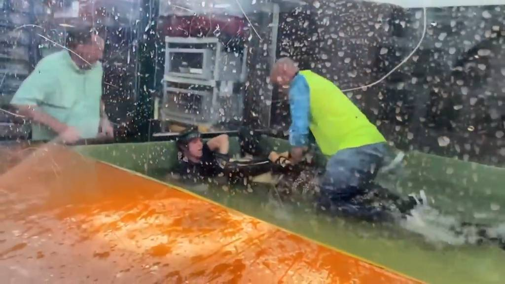 Alligator greift Tiertrainerin an: Mutiger Besucher springt zur Rettung ins Becken
