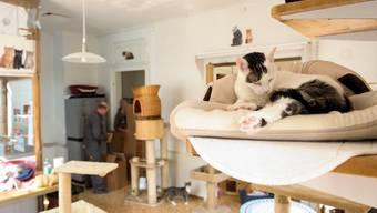 Ein Blick ins Katzenheim vor dem Umzug nach Muttenz im Jahr 2014. Die Büsis nehmens gemütlich, während im Hintergrund schon gezügelt wird. (Archiv)