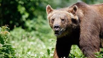 Am Eröffnungsfest des Bärenparks wird es auch Bären aus Glas, Holz, Stein, etc. zu bewundern geben.