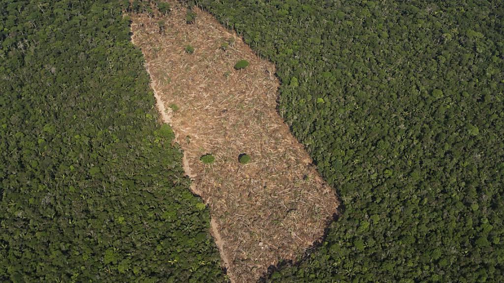 ARCHIV - Blick auf ein abgeholztes Waldstück im Amazonasgebiet. Foto: Victor R. Caivano/AP/dpa