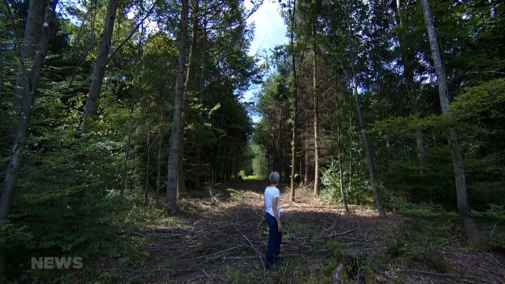 Petition gegen Abräumung im Könizbergwald gestartet