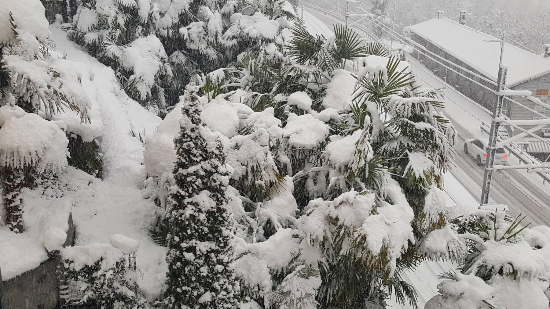 Schnee auf Palmen: In Locarno meldete sich in der Nacht auf Montag der Winter zurück.