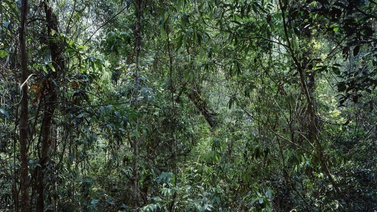 «Paradiese 09» China, Provinz Yunnan, Xi Shuang Banna