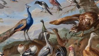 """Das """"Altmeisterwunder"""" des Kunstmuseums St. Gallen erhält Zuwachs. Das Museum hat rund 1500 Werke aus einer privaten Sammlung erhalten, darunter auch das Gemälde """"Vögel in Landschaft"""" von Jan von Kessel."""