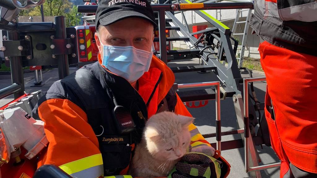 Hier wird Büsi «Louis» von der Feuerwehr gerettet