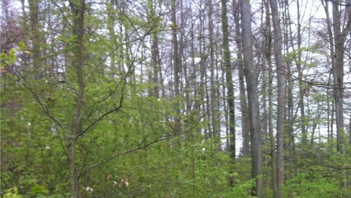 Das unbekannte Tier dürfte immer noch im Wald sein. (Symbolbild)