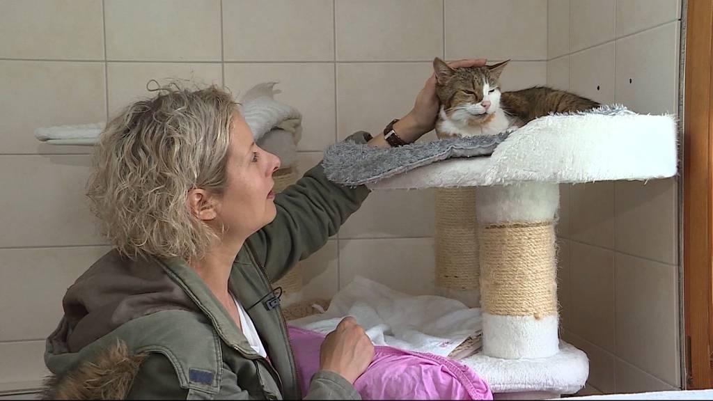 150 Jahre Aargauer Tierschutz: Die freiwilligen Helfer