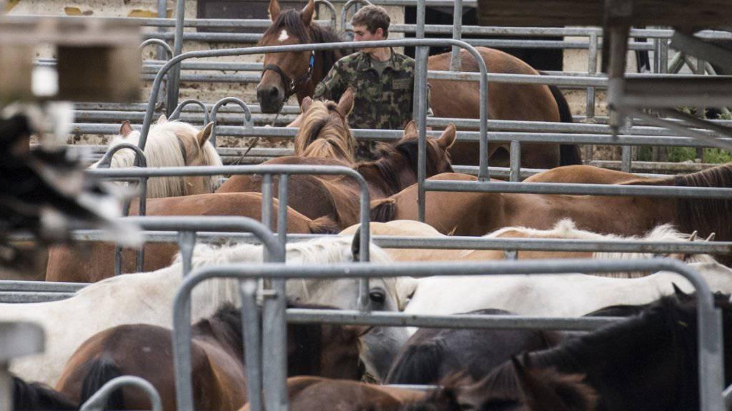 Das Militär sicherte die Pferde des Hefenhofener Pferdezüchters Anfang August.