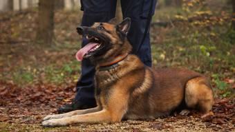 Die Baselbieter Polizeihunde (hier beim Training) sind immer wieder im Einsatz und können flüchtige Personen stellen.