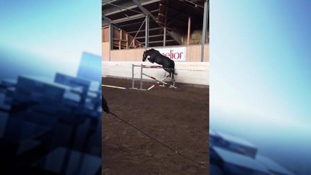Pferdedrama: Sprungtalent wurde zum Verhängnis