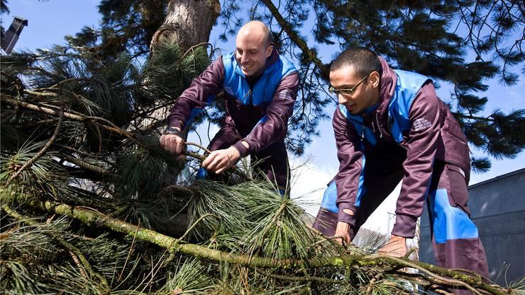 Der Zivildienst wird als Wehrersatzdienst immer beliebter. Zivis leisten etwa Einsätze zur Pflege der Natur.