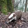 Waldtiere im Lengnauer Wald
