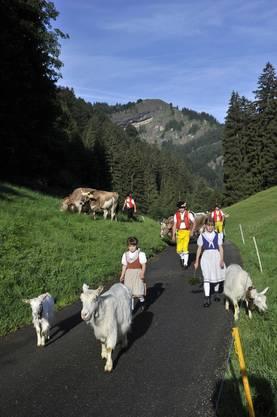 Alpfahrt zur unteren Schwägalp am Samstag, 4. Juni 2011.