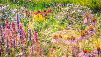Sobald die Blumen ihren idealen Standort im Garten gefunden haben, benötigen sie kaum noch Pflege. Speziell eignen sich Stauden.