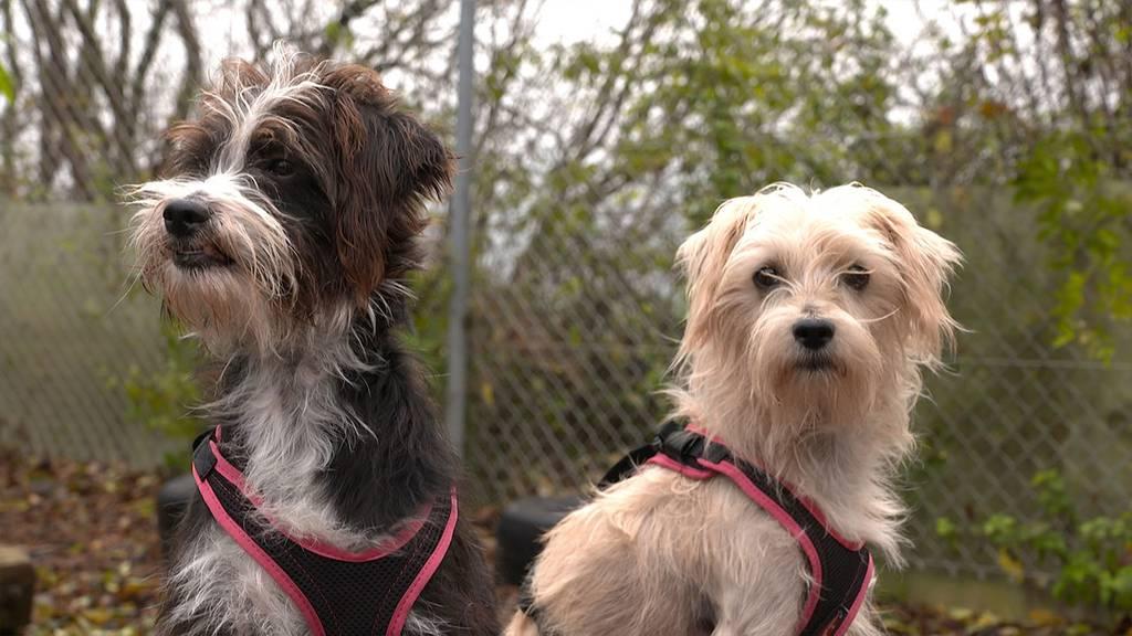 Winnie & Athena