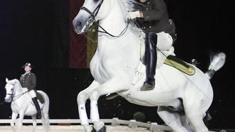 Reiter der spanischen Hofreitschule Wien zeigen ihre Dressurkunst.