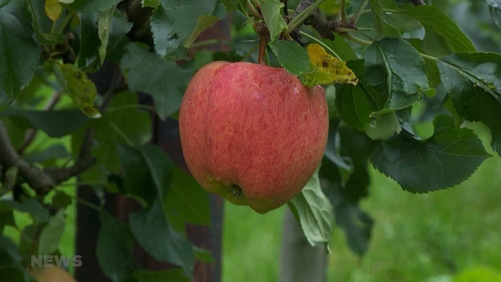 Der Frost macht den Obstproduzenten einen Strich durch die Rechnung