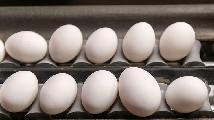 Ein Luzerner Bauer hat sich selbst ein Ei gelegt: Er muss seinen illegalen Hühnerstall abreissen. (Symbobild)
