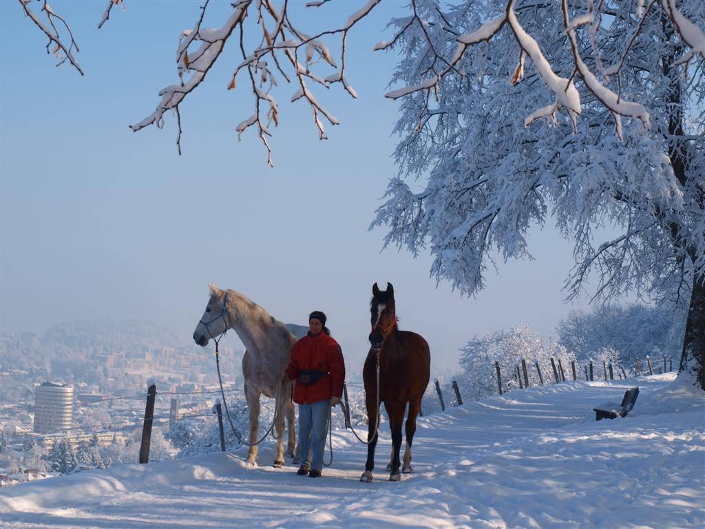Esther Granitzer mit ihren beiden Pferden Osheba und Osheila (Bild: zVg).
