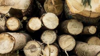 Vom Borkenkäfer befallene, gefällte Fichten im Frauentaler Wald vergangenes Jahr in Cham. Wegen der anhaltenden Trockenheit und den hohen Temperaturen kam es zu einer Borkenkäferplage, welche zu einer elfprozentigen Erhöhung der Holzernte führte. (Archivbild)