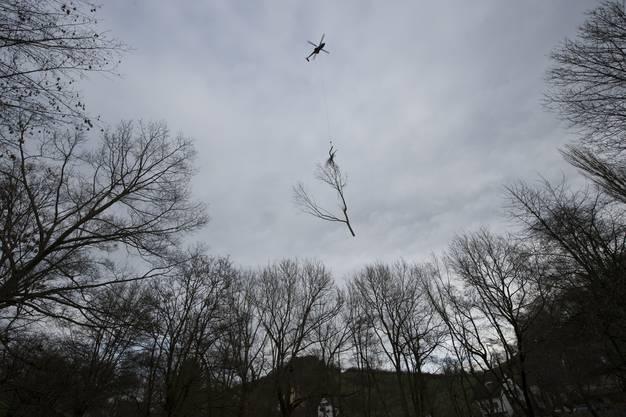 in Superpuma Helikopter der eagle Helikoper fliegt abgeschnittene Bume vom Friedhof Brunnenwiese in eine Waldlichtung hinter dem Herterenhof