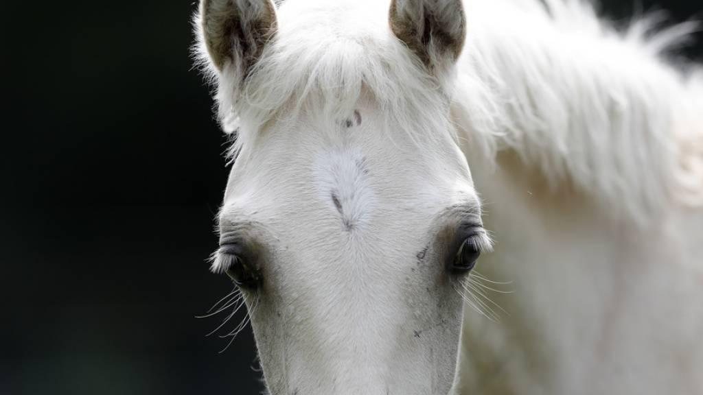 Die Zehnjährige wurde beim Sturz vom Pferd verletzt. (Symbolbild)