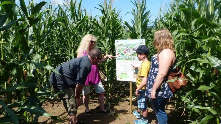 Nicht nur den Weg, sondern auch sechs Motive können Spürnasen im Maisfeld-Labyrinth suchen.