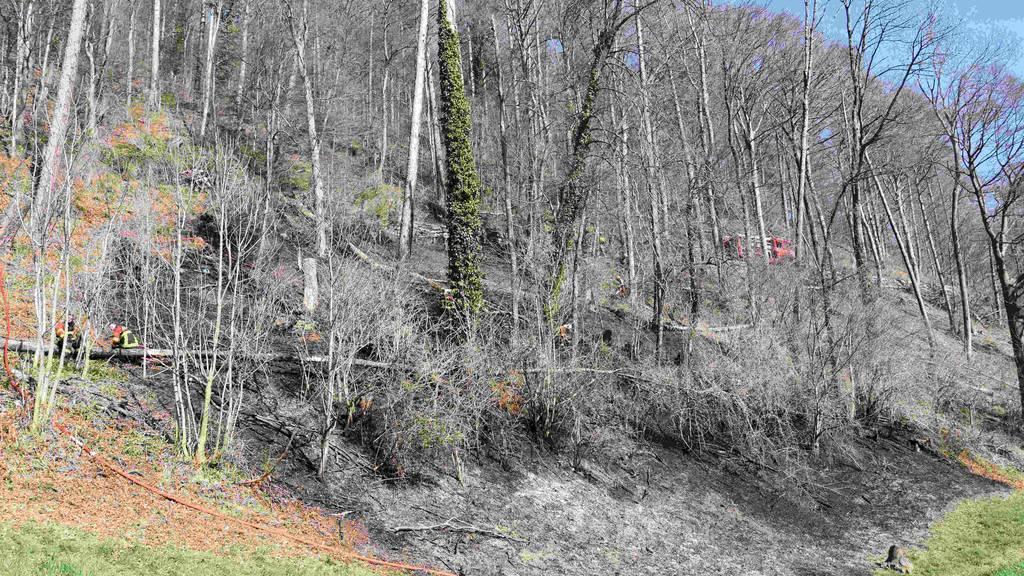 64-Jähriger verursacht Waldbrand und wird angezeigt