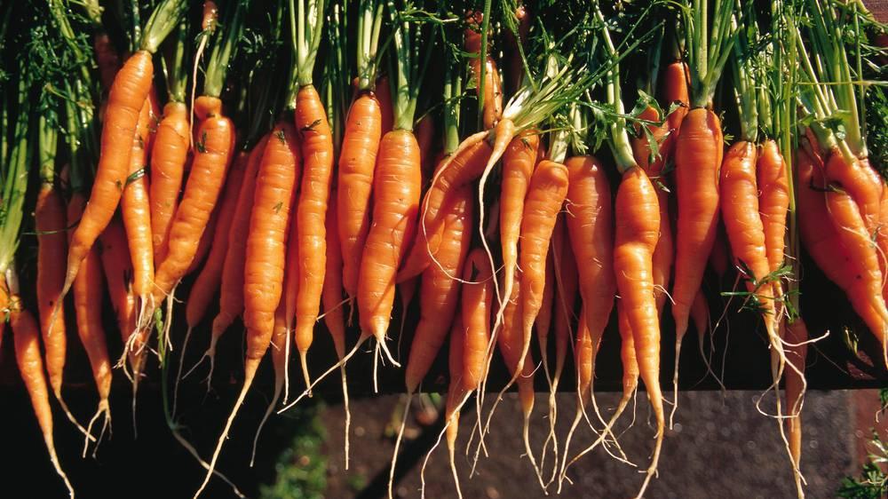Rüebli / Karotten