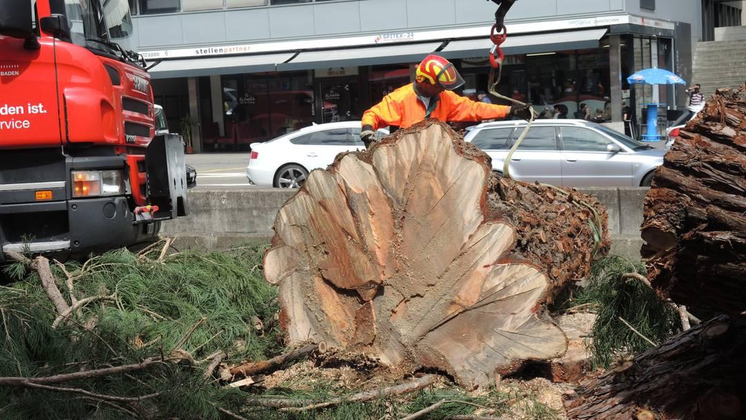 Bis die Spitze fällt: Der Badener Mammutbaum verliert am 29. Juli 2015 Stück für Stück sein Leben.