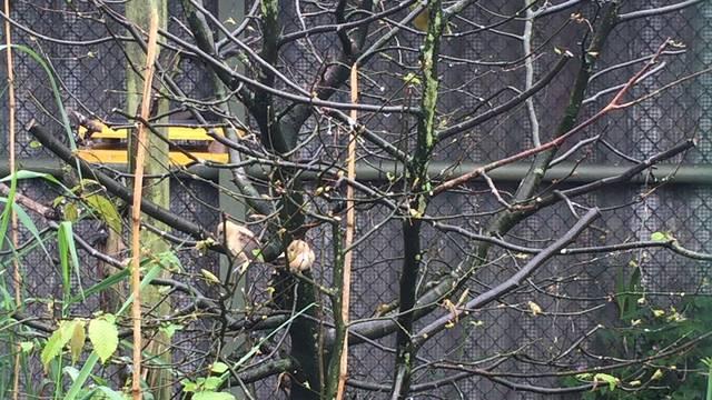 Jungvögel, Schneeeulen und Störche wohnen in der Vogelpflegestation.