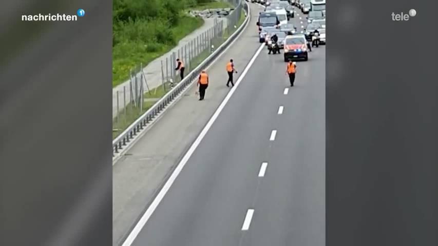 Urner Polizei muss Autobahn sperren um Hund einzufangen