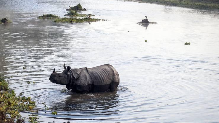 Wilde Nashörner und schlimme Verbrechen: Im nepalesischen Chitwan-Nationalpark gibt es beides.
