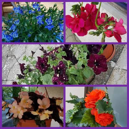 Blumen aus dem Gartencenter: Eine Leserin hat uns dieses Foto von ihren Einkäufen geschickt.
