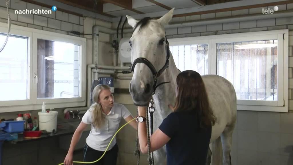 Shiatsu-Therapie für Pferde