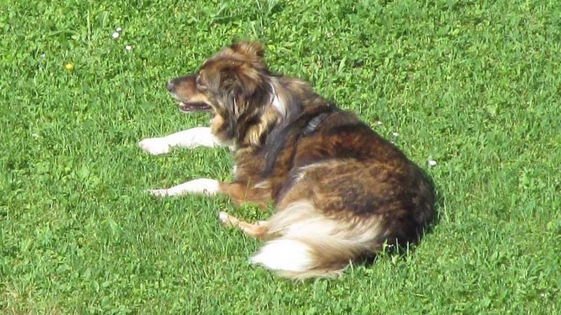 Hund nach einem halben Jahr wieder gefunden