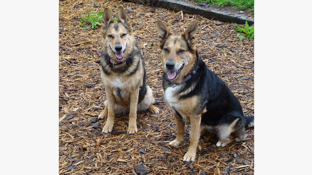 Belina & Zitta