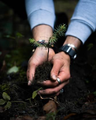 10'000 Bäume lässt Weber nun im Amazonas in Peru pflanzen.