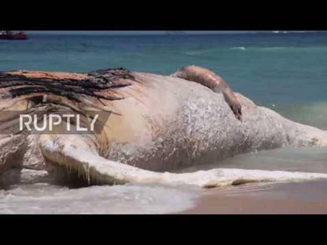 Toter 30-Tonnen-Wal an Strand in Rio gespült