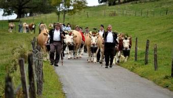 Schau des Viehzuchtvereins Passwang