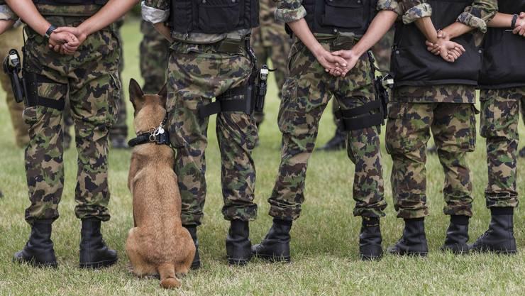 Im Kompetenzzentrum «Veterinärdienst und Armeetiere» werden Hundeführer und Diensthunde ausgebildet.