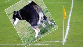 Hundekot auf dem Fussballplatz Ländle: Die Sportler müssen sich auf dem Sportplatz in Würenlos mit allem gefasst machen