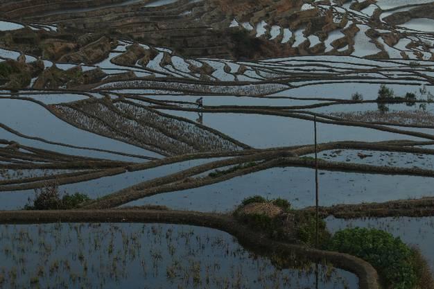 Wir können auch die Einheimischen beobachten, wie sie die Reisterrassen bewirtschaften.