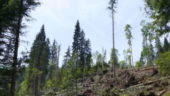 Im Projektperimeter sind innerhalb von 61 Hektaren 19Schutzwaldflächen vorgesehen. (Symbolbild)