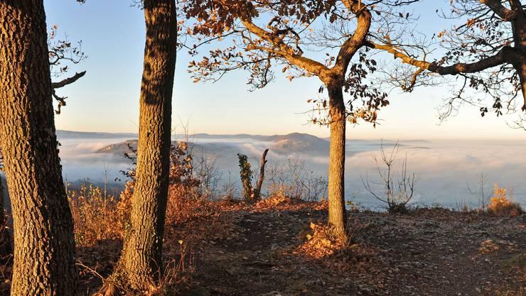 Typisch für den November 2011: Trockene Wälder und Nebel im Tal, hier gesehen vom Gempen auf Dornach und Aesch