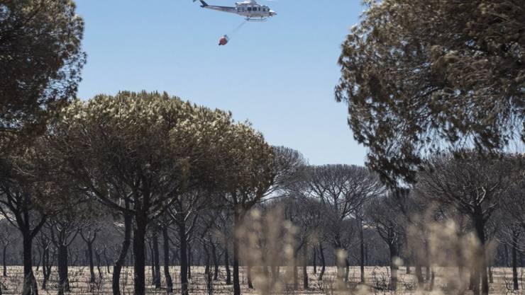 Verkohlte Bäume nach dem Feuer: Der Waldbrand in Andalusien ist unter Kontrolle.