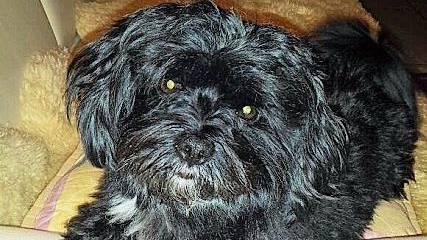 Eine Tafel markiert den Ort, wo die Pit Bull Terrier die Hündin Mila anfielen. Ein Foto aus glücklichen Tagen: Hündin Mila.